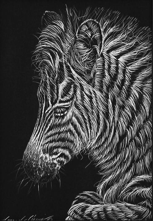 IMG_4347-Zebra